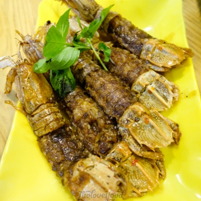 mantis shrimps - bề bề